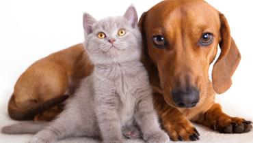 Cómo eliminar el olor de las mascotas