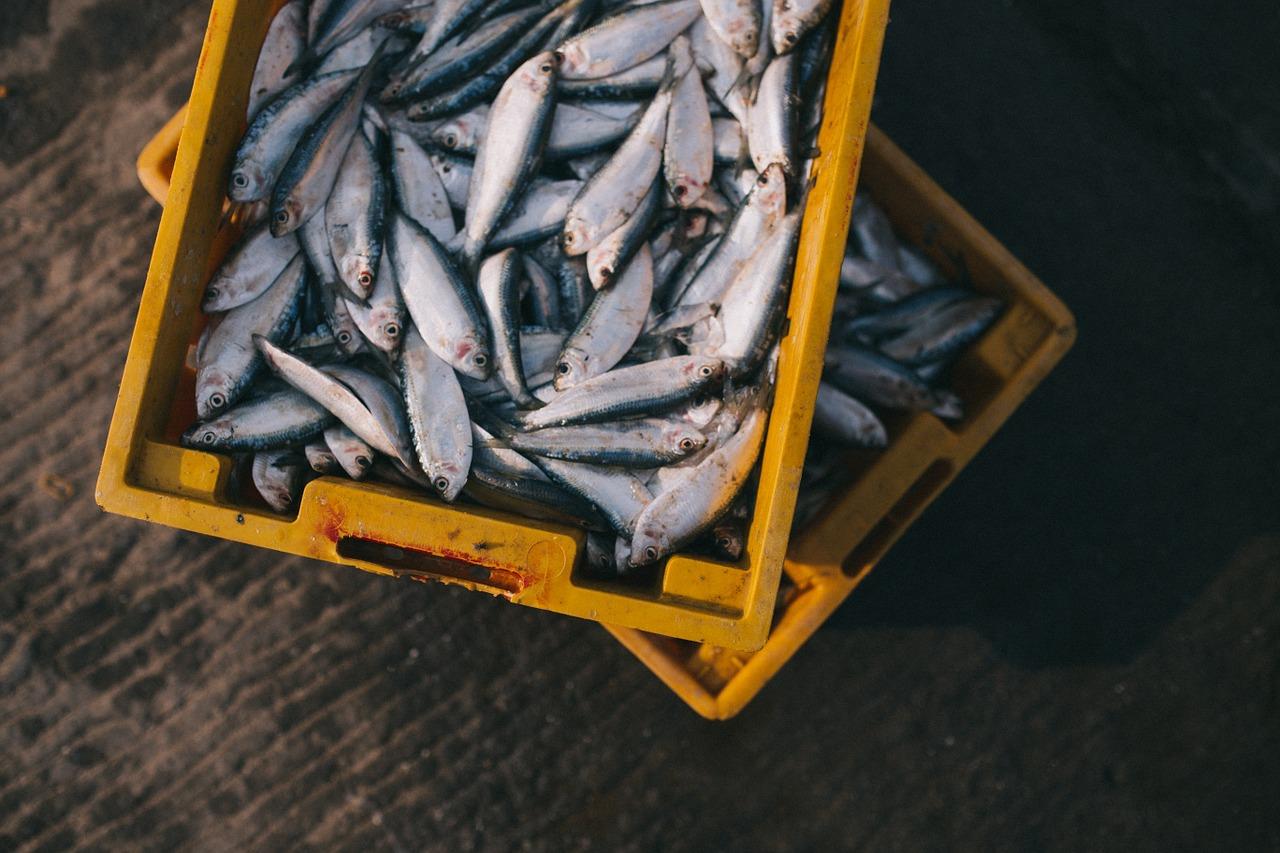 Ozono en la conservación y depuración de pescados y moluscos