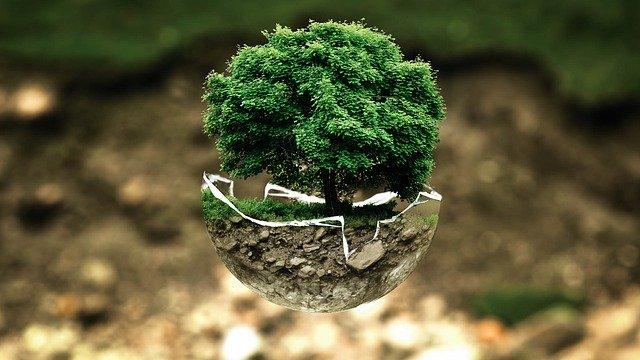 Ozono en la  producción orgánica
